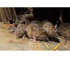 spiritual rats money Amagundane sangoma +27634299958 in Canada