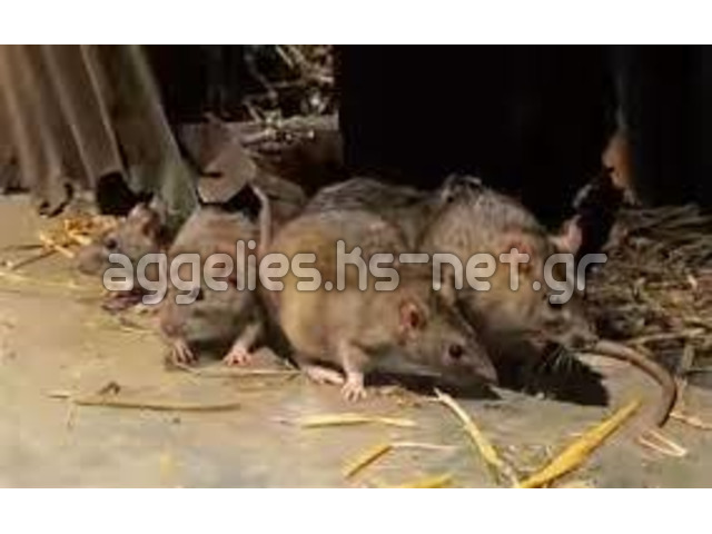 try amagundana Spiritual Rats money Baba messe In Asia Europe +27634299958